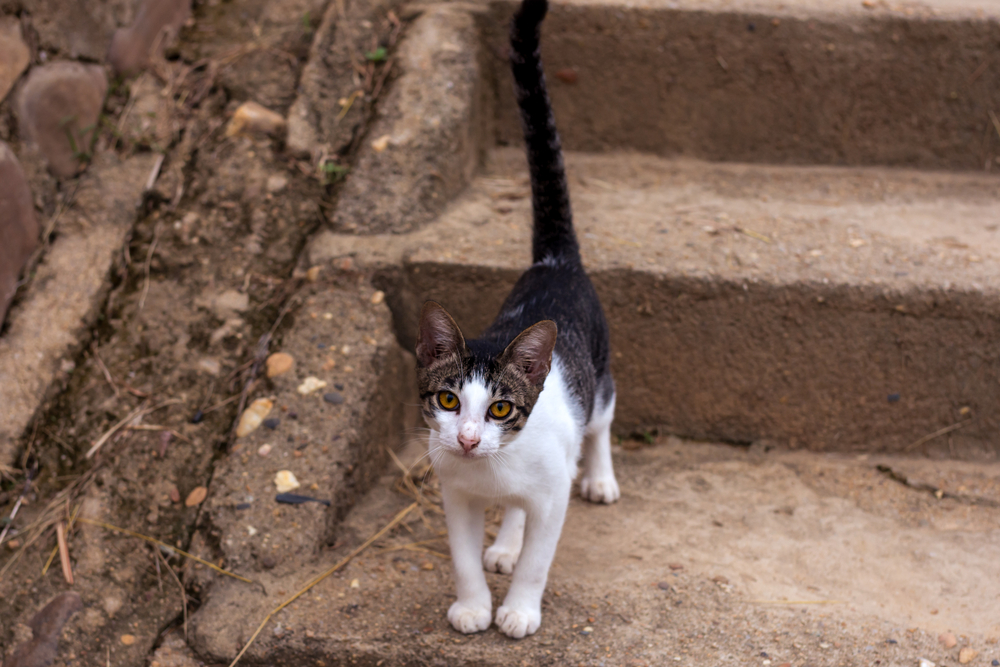 Почему кошка дергает кончиком хвоста