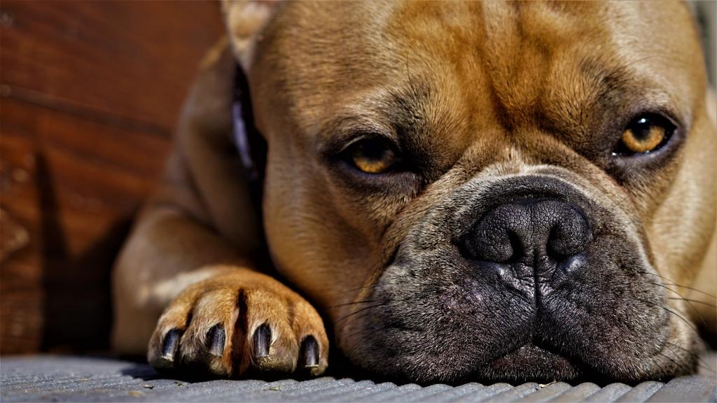 Зачем стрич когти собаке