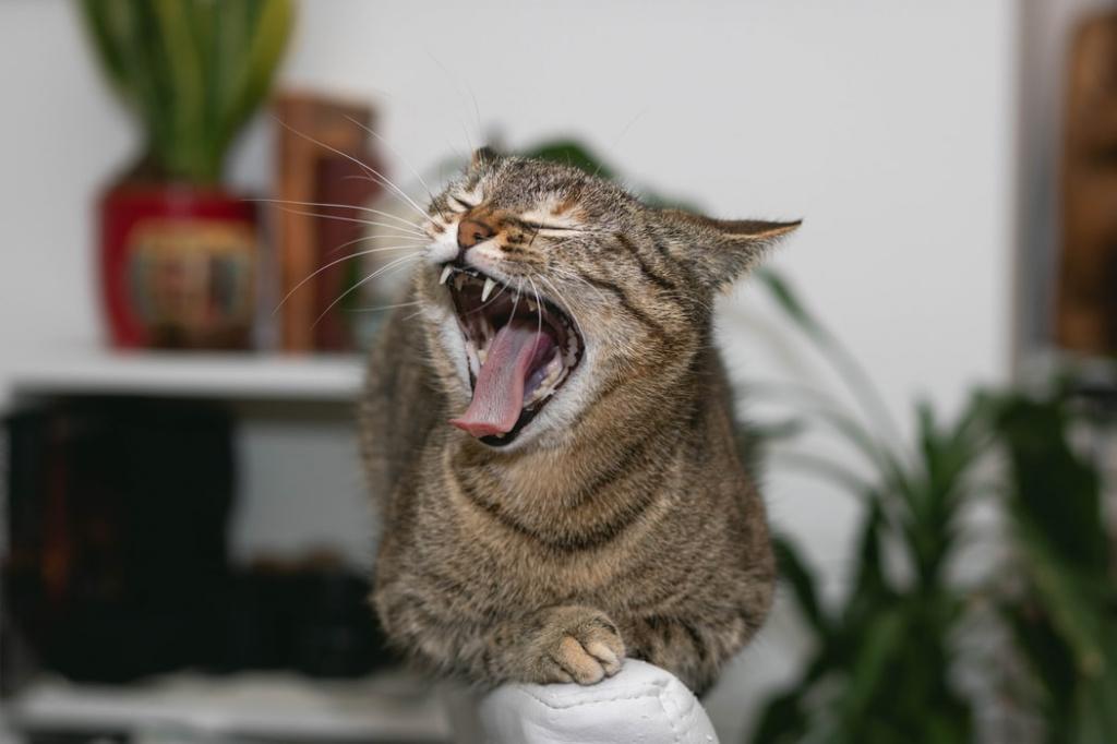 Лечение стоматита у кошек