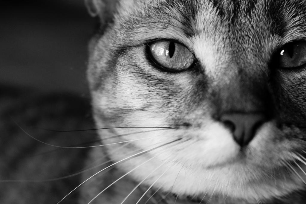 Первая помощь, когда у кошки отнимаются лапы