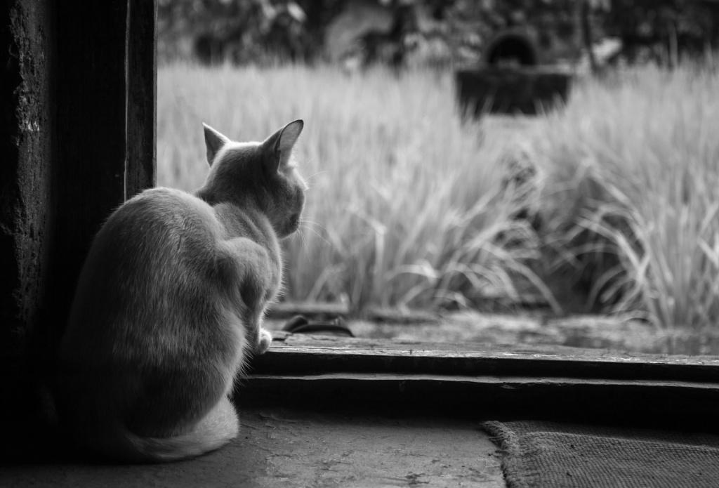 Противопоказания к применению наркоза кошкам