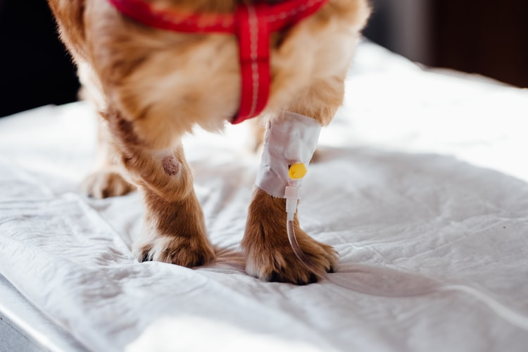 Отклонения в анализе крови у собак