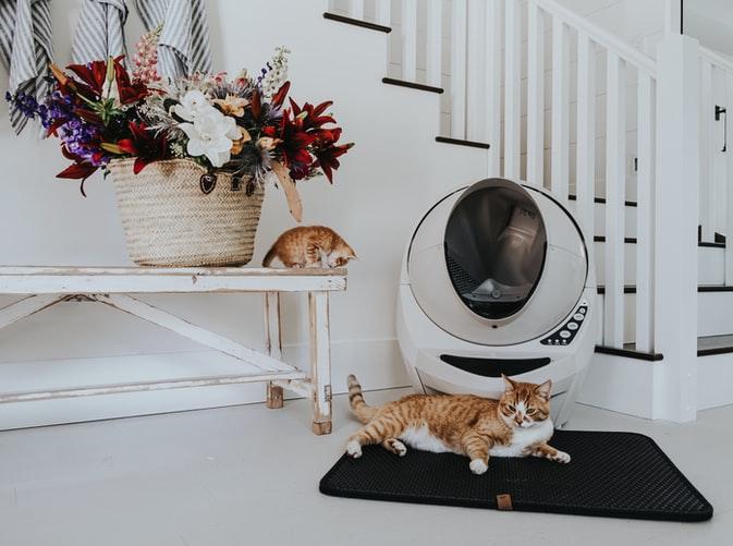 Как подружить взрослого кота или кошку и котенка