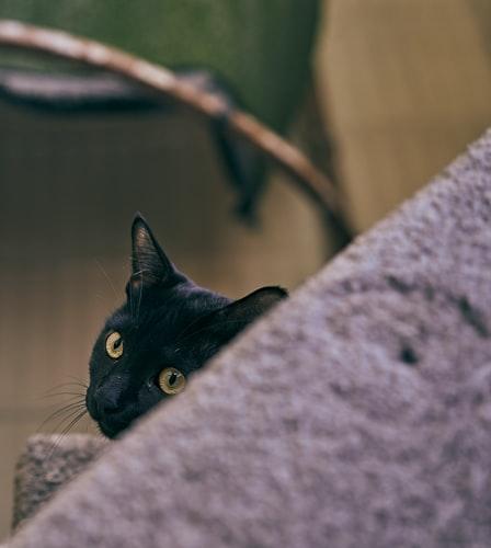 Замаскировать или убрать провода, чтобы кот их не грыз