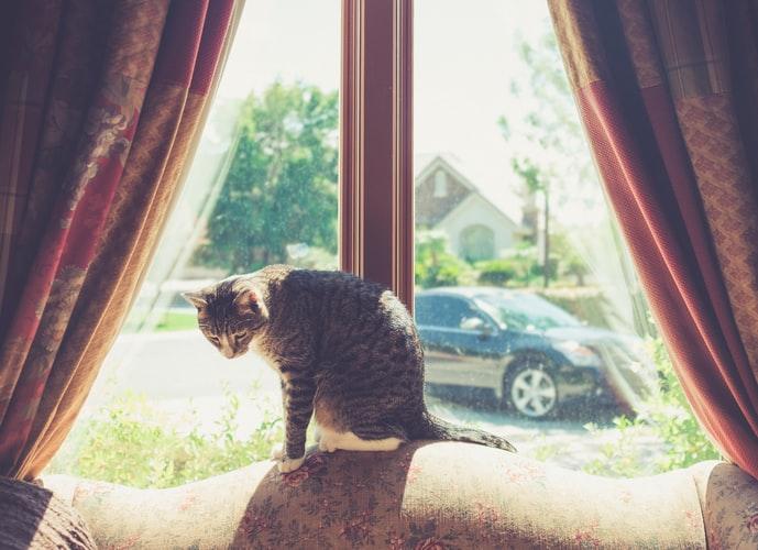 Кот гадит из-за стресса