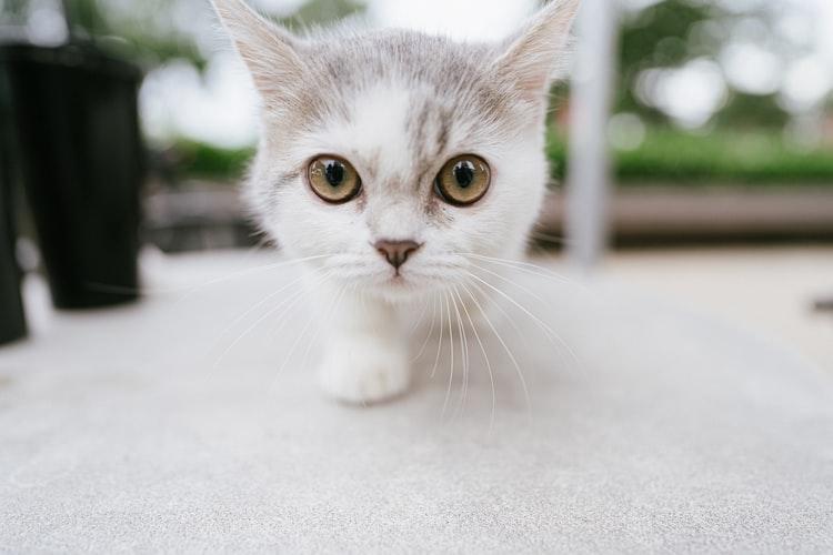 Лечение акне у кошек с помощью диеты