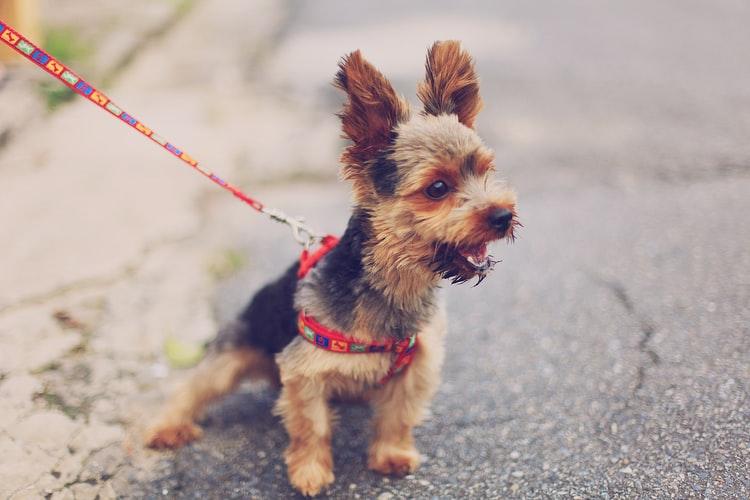 рабизин от бешенства собаке