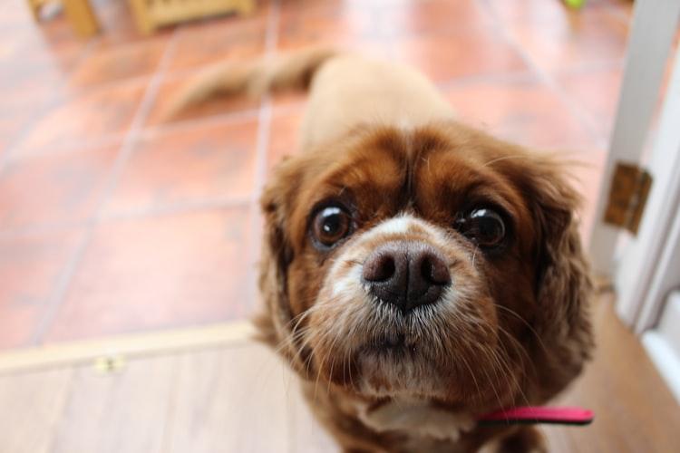 Диагностика крови в кале у собаки