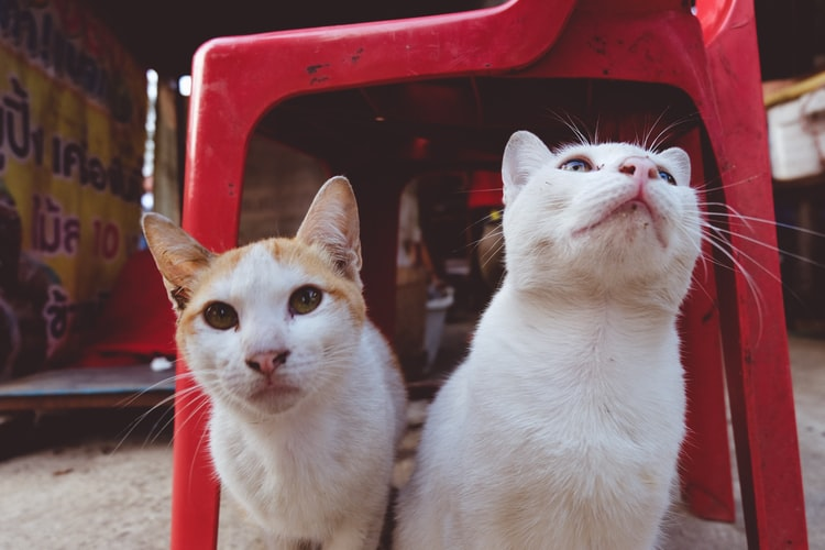 Распространенные причины конфликтов между кошками