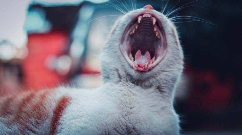 5 форм стоматита у кошек