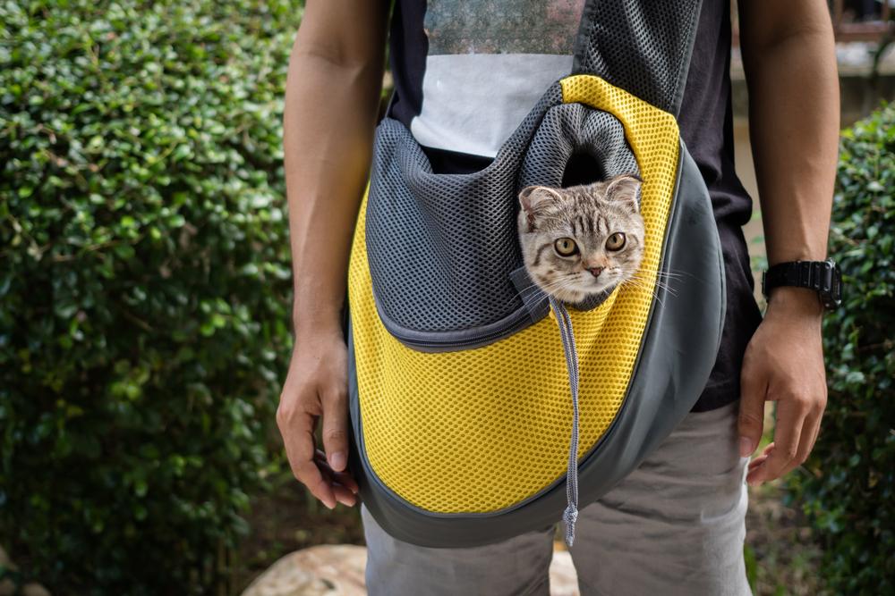 Какая переноска для кошек лучше: слинг