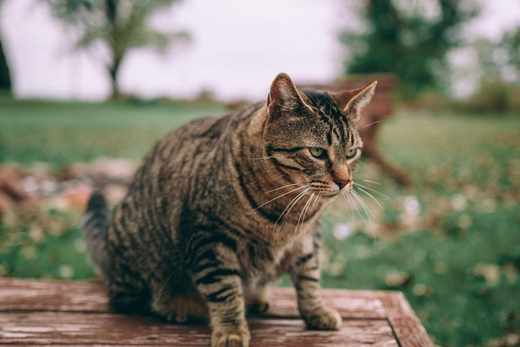 кошка ест траву, чтобы хорошо работал кишечник