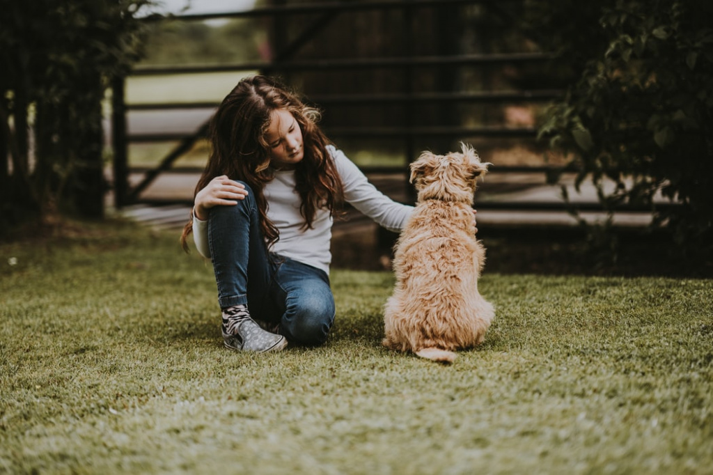 как происходит вязка собак