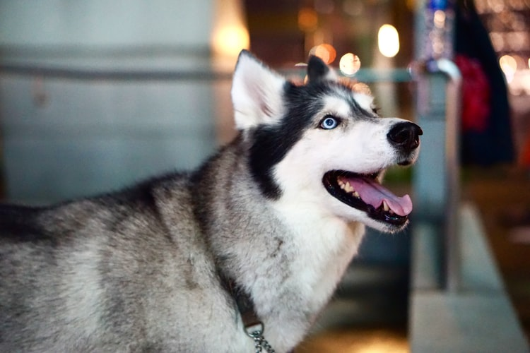 Что советует ветеринар если у собаки пахнет изо рта