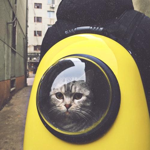 Трудности при перевозке кошек в поезде