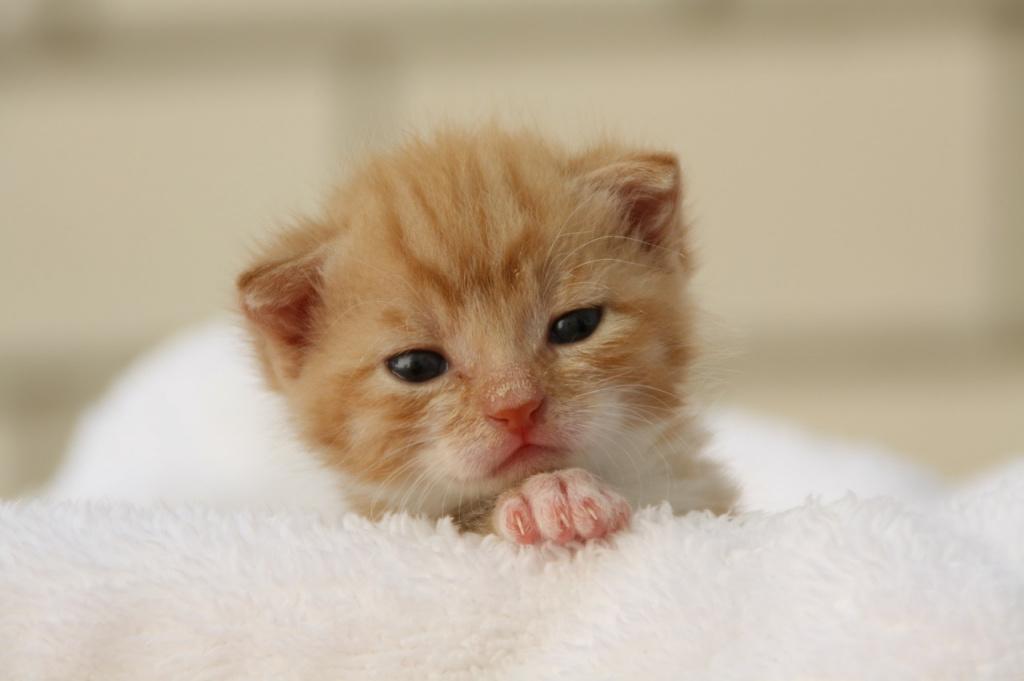 Кошки любят, когда их гладят из-за детских воспоминаний