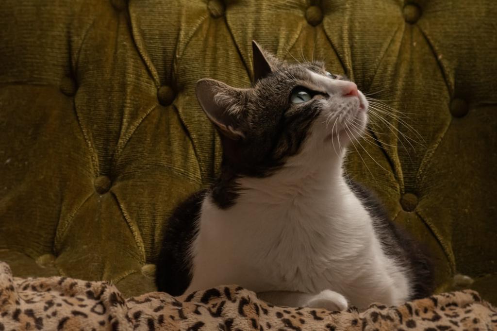 Виды сердечной недостаточности у кошек