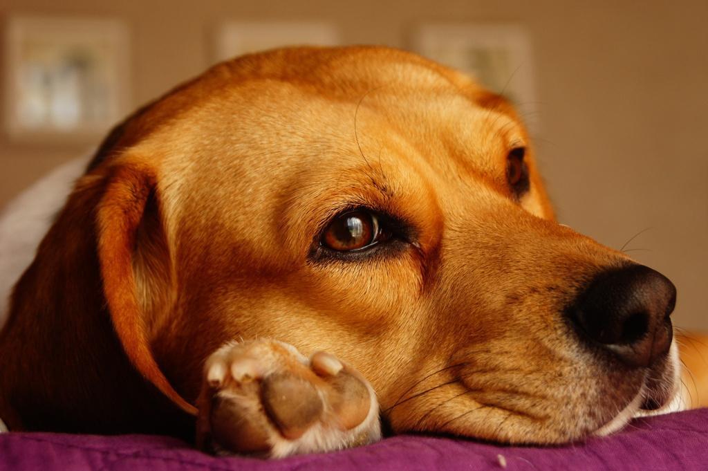 Что сделать чтобы собака привыкла стричь когти