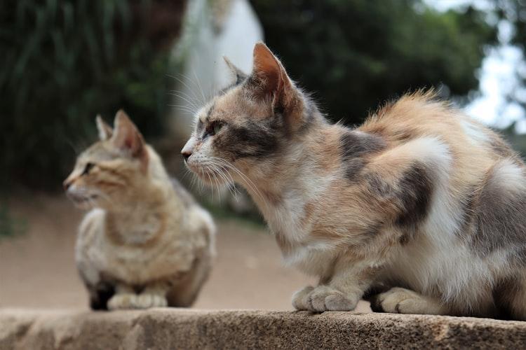 Как снизить риск проявления агрессии и вырастить ласковое животное