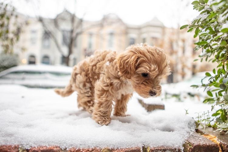 как лечить рвоту у собаки белой пеной