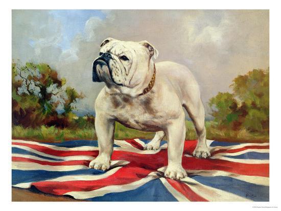 История происхождения английского бульдога