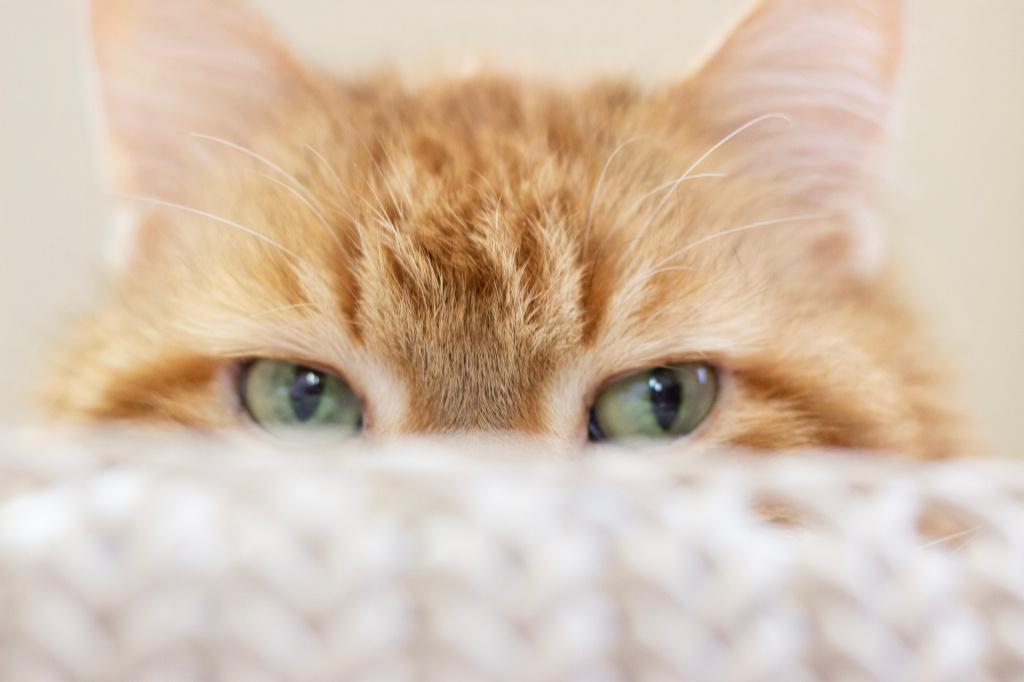 Как подготовиться к родам у кошки