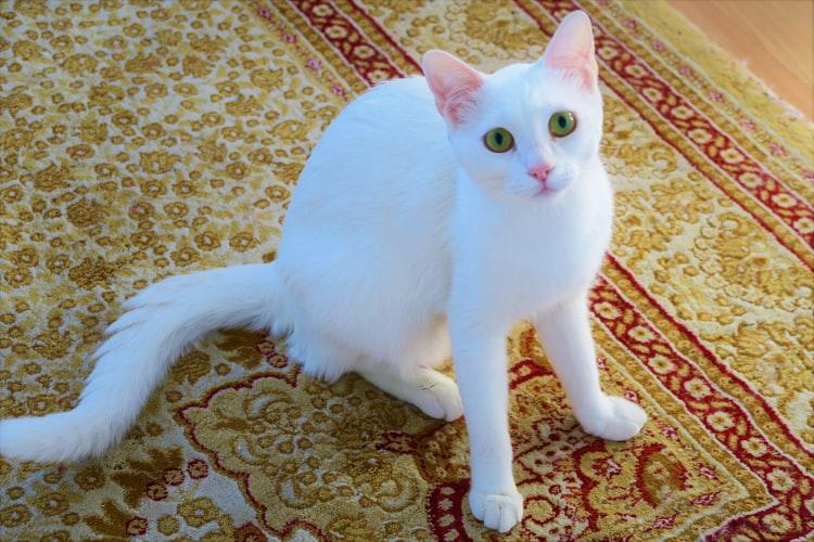 Почему кот гадит