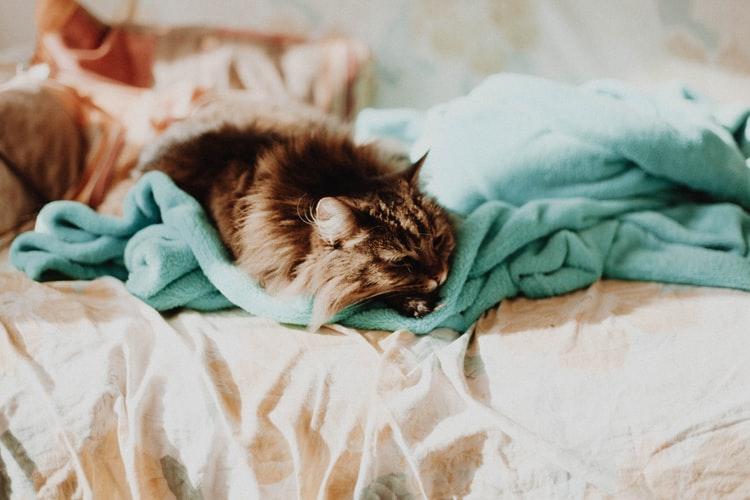 Что заставляет кошку спать в ногах