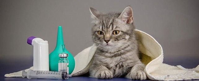 В чем плюсы укола коту внутримышечно