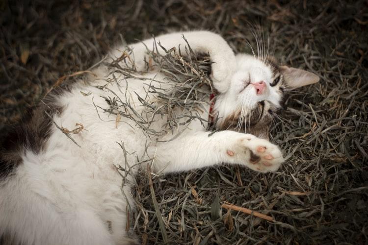 выращивание травы для кота в земле