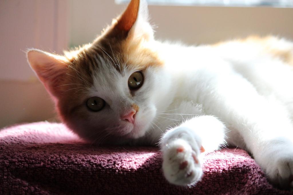 Где и когда гладить кошку, чтобы ей нравилось?
