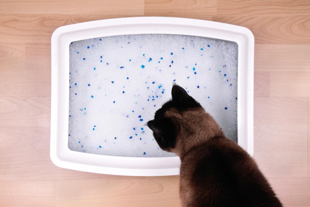 принцип действия силикагелевого наполнителя для кошек