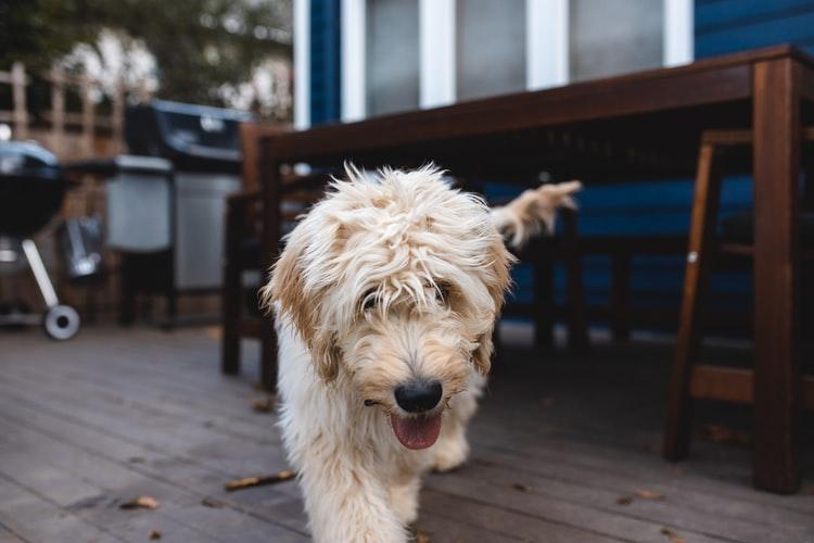Наследственные болезни у собак