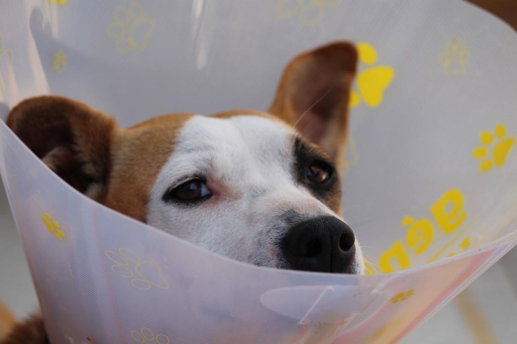 Удаление липомы у собак