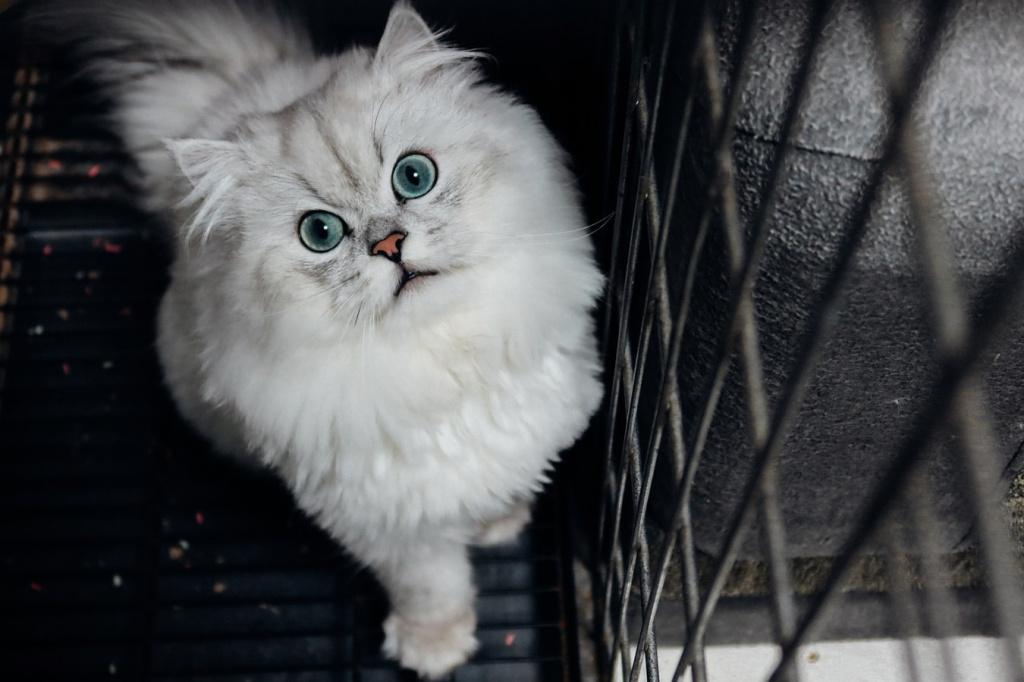 Правила перевозки кошки в поезде РЖД по России