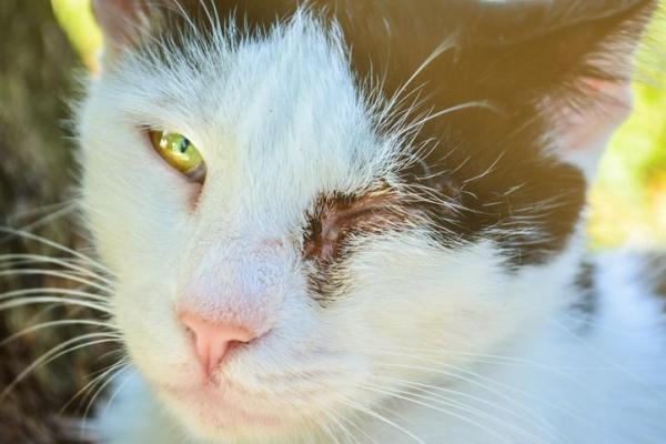 Болезни при которых нужно промывать глаза кошке