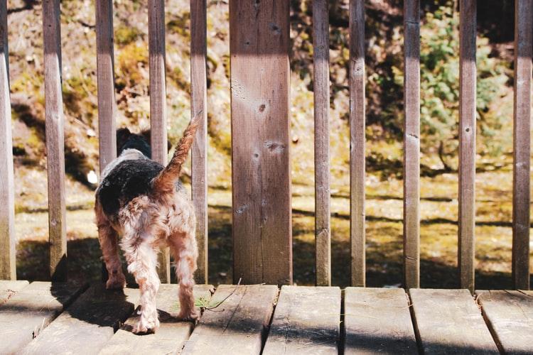 Диета при воспалении параанальных желез у собак