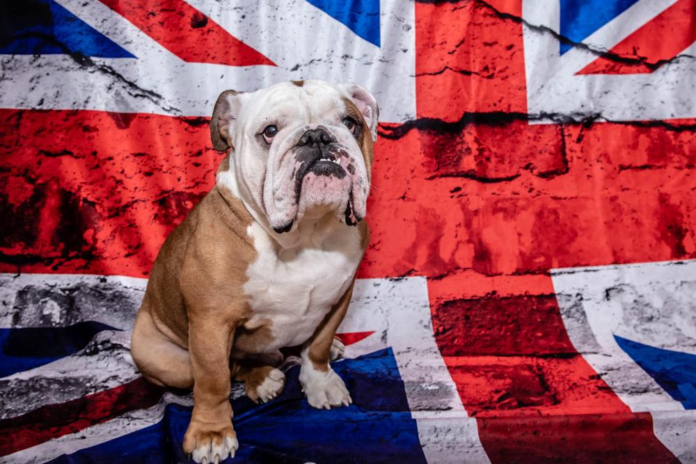 Английская классификация пород собак