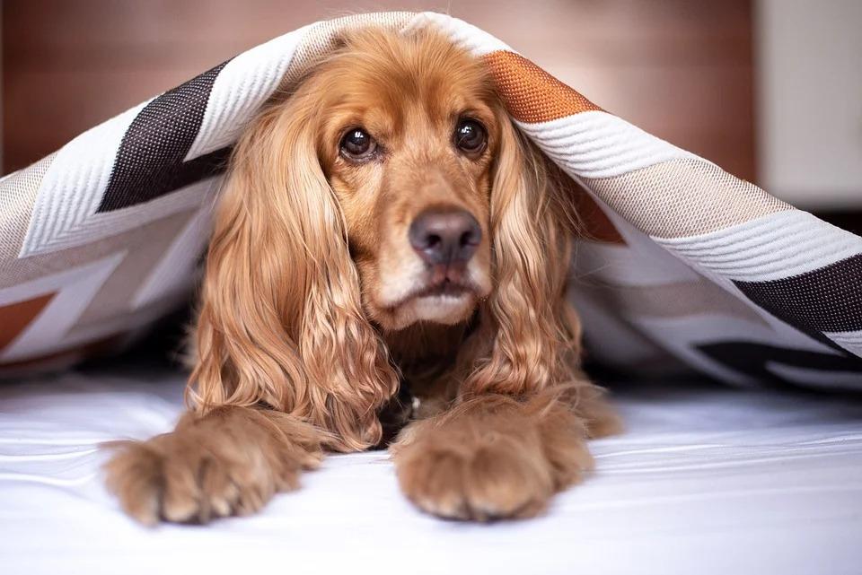ячневая крупа для собак