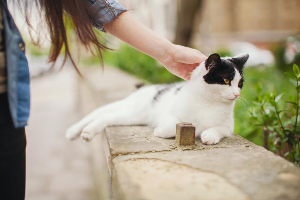 Лечение первопричин твердого живота у кота