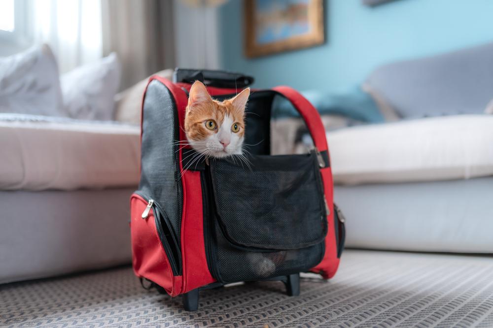 Какая переноска для кошек лучше: на колесиках