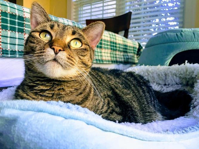 кот: гадит или метит территорию