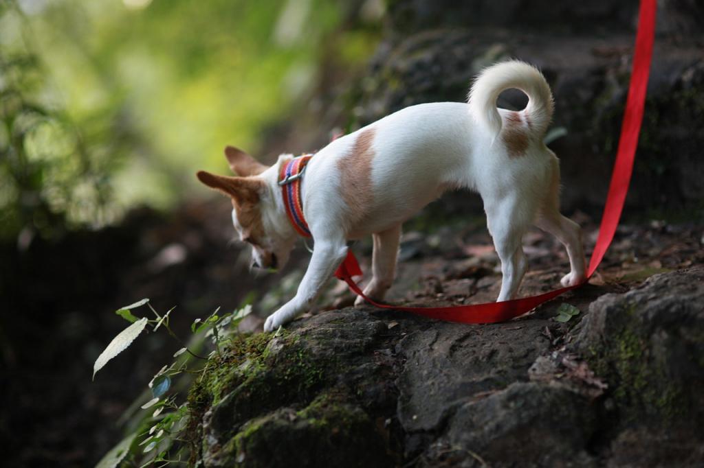Лечение собаки в случае отека Квинке или удушья