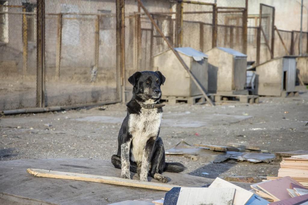 Сложности с собакой, взятой из приюта