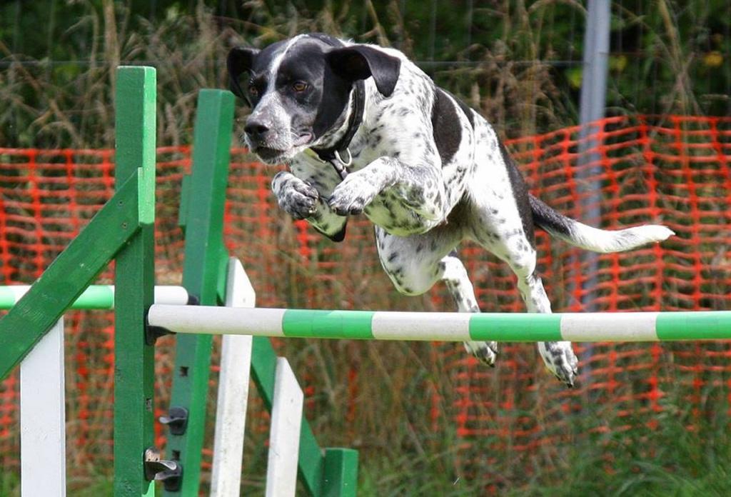 как научить собаку командам на спортивных курсах