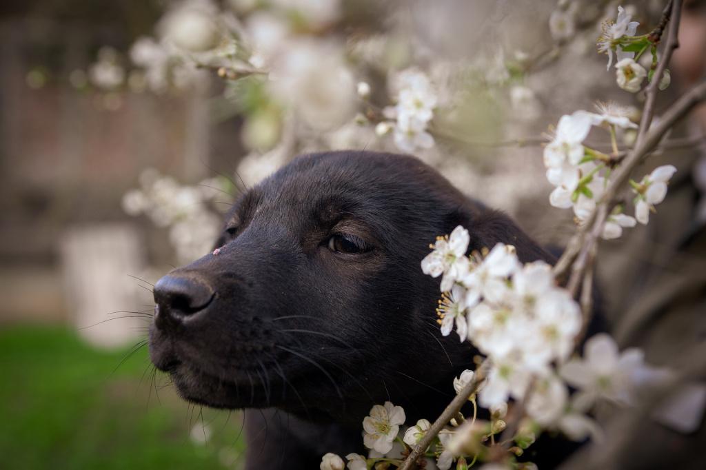 Сроки течки у собак