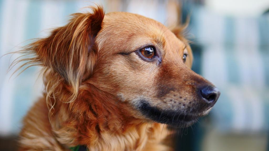 как проявляются судороги у собаки