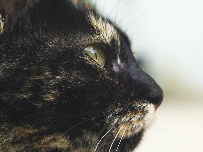 промывать глаза чаем коту
