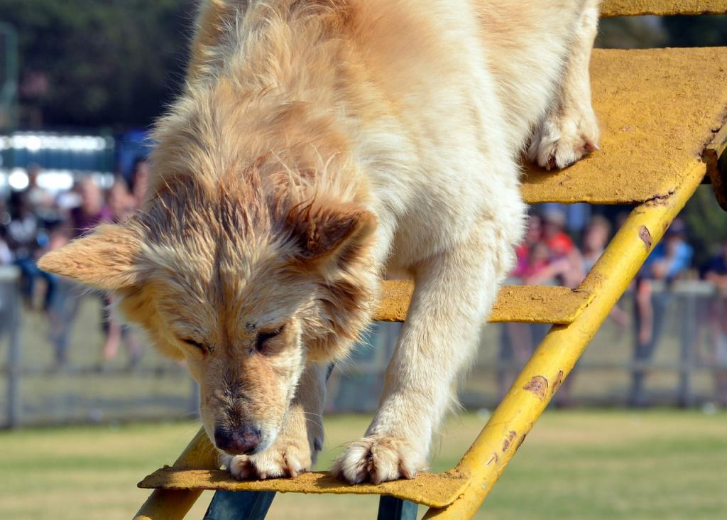 как научить собаку командам со вспомогательными предметами