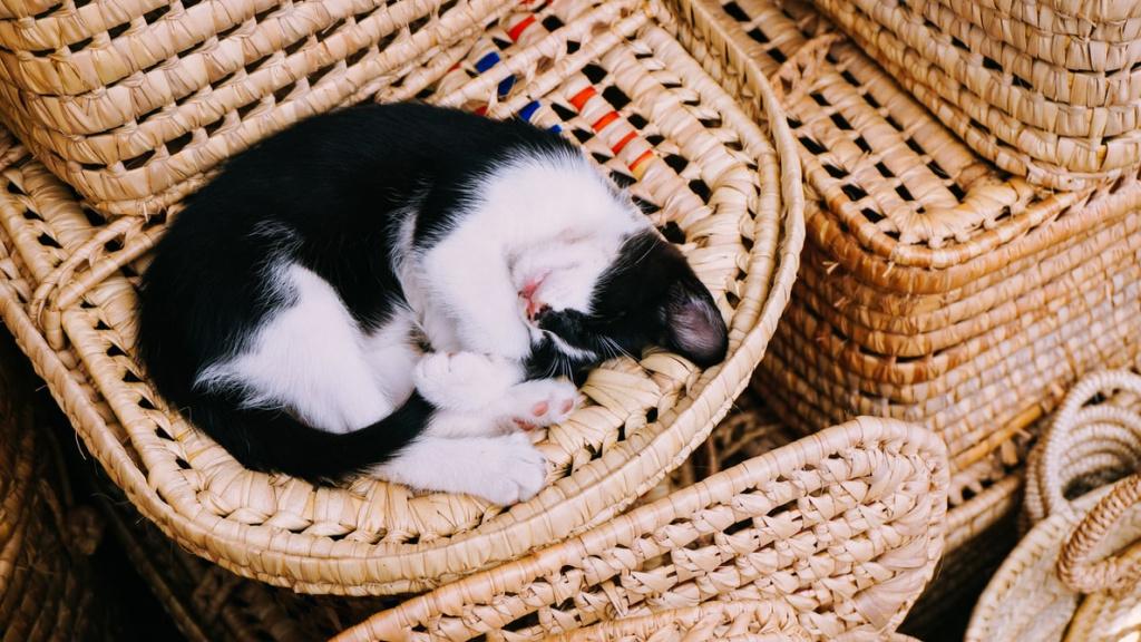 Опасен ли храп у кошек